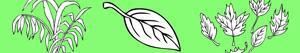 desenhos de Plantas e Folhas para colorir